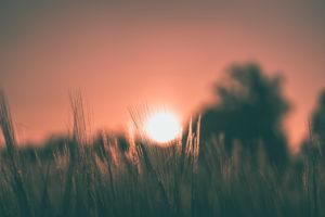 Sonnenuntergang im Kornfeld, Sonnenball, Baden-Württemberg, Deutschland, Europa