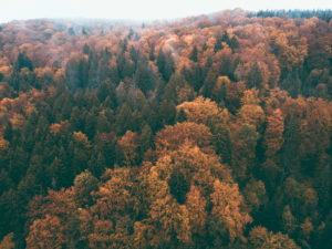 Herbst auf der Schwäbischen Alb, Wald, Bäume, Luftaufnahme, Baden-Württemberg, Deutschland, Europa