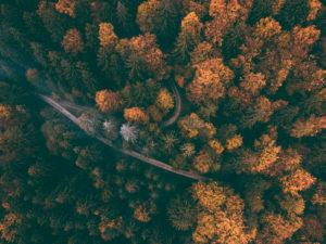 Herbst auf der Schwäbischen Alb, Waldweg, Kehre, Luftaufnahme, Baden-Württemberg, Deutschland, Europa