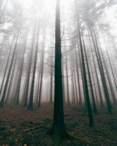 Wald, Bäume, Nebel, Herbst, Schwäbische Alb, Baden-Württemberg, Deutschland, Europa