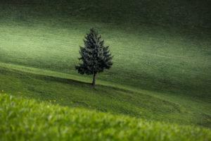 Einsamer Baum auf einer Wiese, Nadelbaum, Grün, Wiese, Landschaft