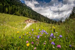Alpine hut in the Berchtesgaden Alps, colorful flower meadow, Ramsau bei Berchtesgaden, Bavaria, Germany