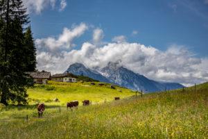 Berchtesgadener Land, Mordaualm, alpine summer in Bavaria, Germany, Bavaria, Ramsau bei Berchtesgaden, cows,