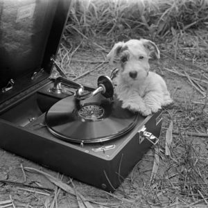 Werbefoto: ein neugieriger Welpe untersucht ein Grammophon mit einer Electrola Schellackplatte, Deutschland 1930er Jahre. Advertising: a nosey puppy examining a gramophone with a shellack record, Germany 1930s.