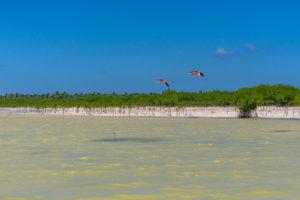 America, Caribbean, Greater Antilles, Dominican Republic, Oviedo, Laguna de Oviedo, flamingos fly over the Laguna de Oviedo