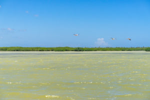 America, Caribbean, Greater Antilles, Dominican Republic, Oviedo, Laguna de Oviedo, flamingos in the bird sanctuary of the Laguna de Oviedo