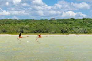 America, Caribbean, Greater Antilles, Dominican Republic, Oviedo, Laguna de Oviedo, flamingos on the saltwater lake Laguna de Oviedo