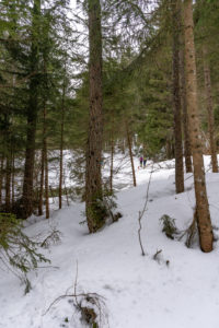 Europa, Österreich, Berchtesgadener Alpen, Salzburg, Werfen, Ostpreussenhütte, Skitourengeher im lichten Bergwald