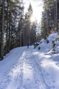 Europa, Österreich, Berchtesgadener Alpen, Salzburg, Werfen, Ostpreussenhütte, Wanderer auf einem verschneiten Forstweg im lichten Bergwald