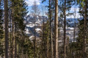 Europa, Österreich, Berchtesgadener Alpen, Salzburg, Werfen, Ostpreussenhütte, Blick durch den lichten Bergwald auf das Talbecken um den Ort Werfen und auf das Tennengebirge