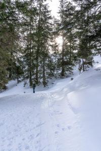 Europa, Österreich, Berchtesgadener Alpen, Salzburg, Werfen, Ostpreussenhütte, Wanderer im winterlichen Bergwald