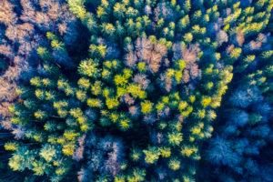 Aerial view Swabian Forest in autumn, Rems-Murr-Kreis, Baden Württemberg, Germany