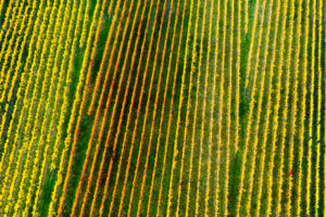 Drone image, vineyard in Remstal, Baden-Württemberg, Germany