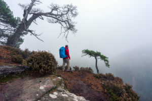 Hiker with red jacket, young man, with backpack, mystical sea of fog, Palatine forest, tree