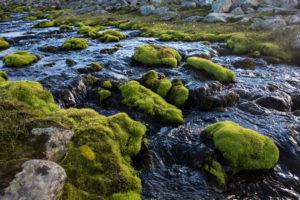 Brook in Sarek National Park, Sweden