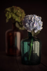 Hydrangea and glass bottles