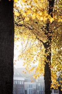 Niederlande, Groningen, gefärbte Herbstblätter in der Morgensonne am Kanal