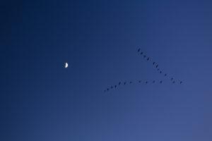 Birds fly in the night sky