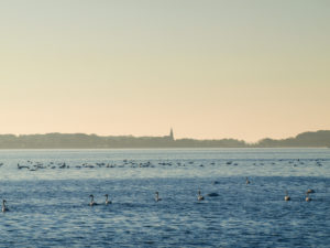 View to Schaprode to the church tower over the Schaproder Bodden, Mecklenburg-West Pomerania, Germany