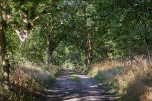 old avenue in Mecklenburg-Western Pomerania