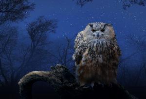 eagle owl, bubo bubo, on branch, night, starry sky
