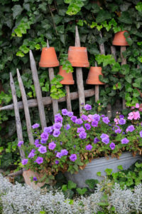 Old wooden fence with clay pots and flowers
