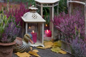 Autumnal garden Still life with lanterns and winter heather on wooden floor