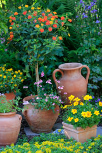 Garden decorations, various terracotta pots with flowering plants