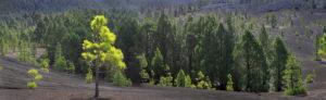 La Palma island, El Pilar, lava scenery, the Canaries, Spain, Europe, panoramic picture