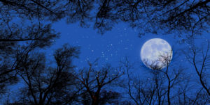 Starry sky with full moon above the tree tops