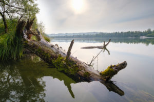 old tree trunk on the lake shore, Ickinger Reservoir, nature reserve Isarauen, Oberbayern, Bayern, Bavaria, Germany