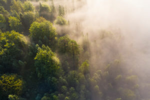 Fog over forest at sunrise, near Mittenwald, aerial view, Werdenfelser Land, Upper Bavaria, Bavaria, Germany