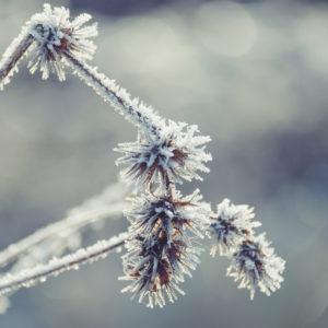 Winterstimmung Close-up gefrorene Gräser mit Raureif