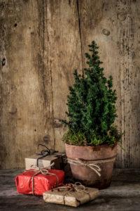Weihnachtliches Stillleben mit einem kleinen Tannenbaum im Terrkottatopf und Geschenken vor einer Holzwand