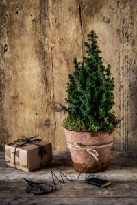 Kleiner Weihnachtsbaum im Tontopf und Geschenk auf Holztisch vor Holzwand