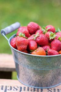 Frisch geerntet: Erdbeeren in einer Zinkschüssel auf einer Holzkiste im Garten, unscharfer grüner Hintergrund