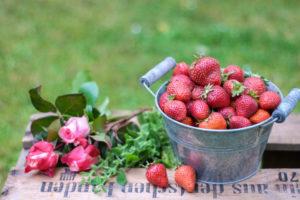 Sommer-Stillleben mit frisch geernteten Erdbeeren und Rosen auf einer Weinkiste, unscharfer grüner Hintergrund