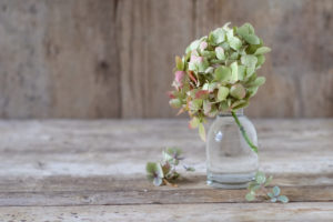 Late-summery autumnal still life with hydrangea in small glass vase on wood