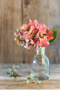 Late-summery or autumnal still life with hydrangea blossom in a small glass vase