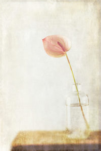 Minimalist still life with a pink blossom in a glass vase