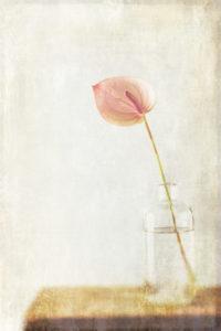 Minimalistisches Stillleben mit einer rosa Blüte in einer Glasvase