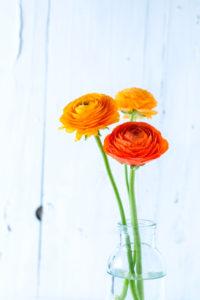 Drei orange Ranunkeln in einer Glasvase