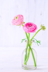 Two pink ranunculus in a simple glass vase on white wood