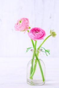 Zwei rosa Ranunkeln in einer schlichten Glasvase auf weißem Holz