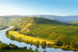 view to the Moselle and the vineyards behind it, in the summer, close Trittenheim with a cloudless sky.