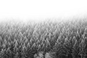 Misty winter landscape in the Hunsrück (German low mountain range)