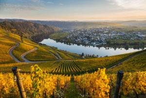 The Moselle loop at Piesport with view of autumnal vineyards.