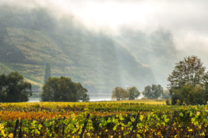 Moselle and autumnal vineyards at Trittenheim, Germany