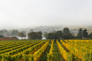 Moselle landscape at Riol, Germany