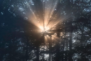 Morning sunbeams breaking through the foliage of a forest, Germany
